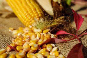 kukurydza na włos